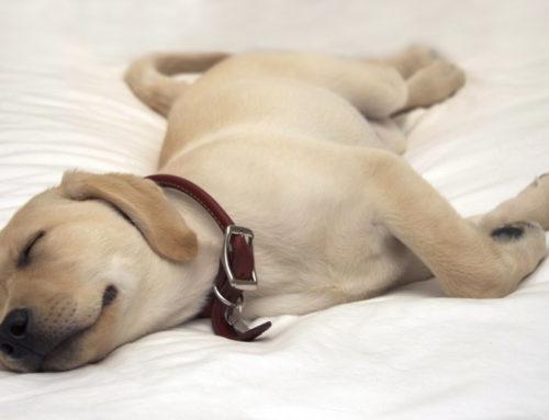 Ist Ihr Hund auch so faul?